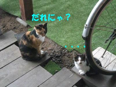 2012_08030004.jpg