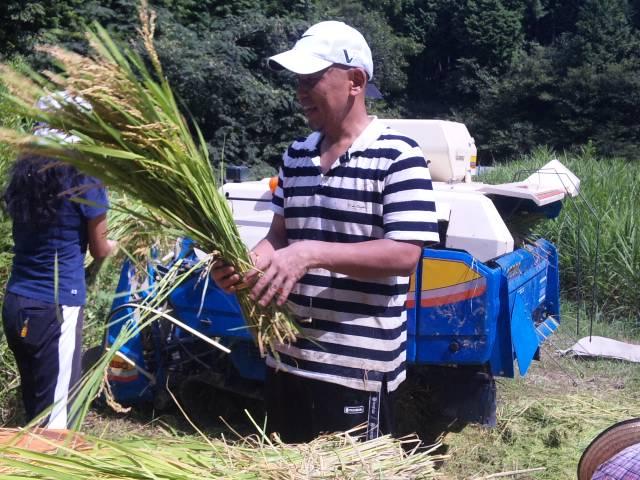 2012稲刈り