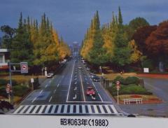 IMGP2487-3.jpg