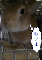 スクリーンショット(2012-11-04 14.04.39)