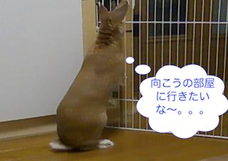 スクリーンショット(2012-11-26 19.17.25)