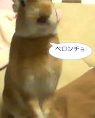 スクリーンショット(2012-11-28 0.15.25)