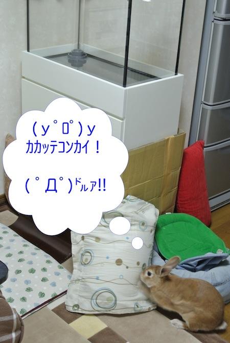 DSC_3091.jpg