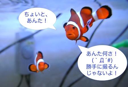 DSC_4672.jpg