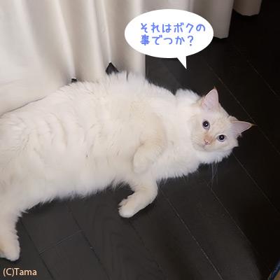 20120515_06.jpg