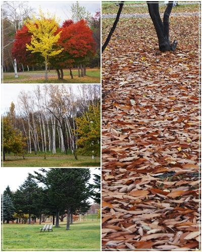 大きな秋見~つけた♪