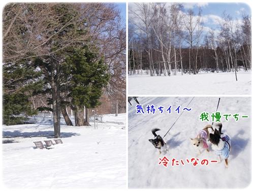 最後の雪散歩だよ~