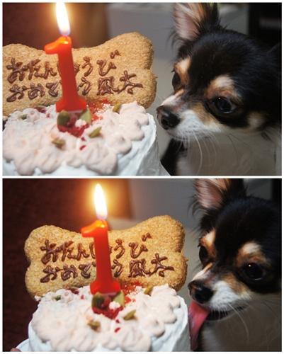 風太のケーキだよ~♪