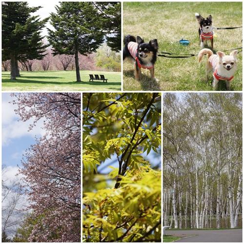 春の真駒内公園