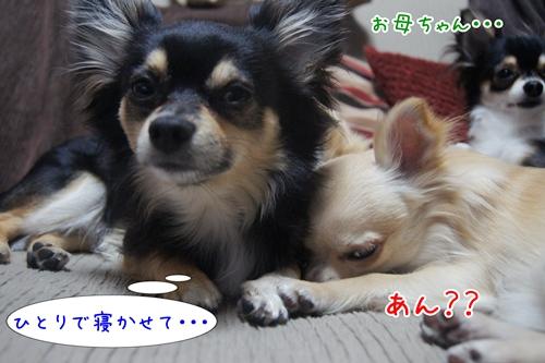 DSC01971.jpg