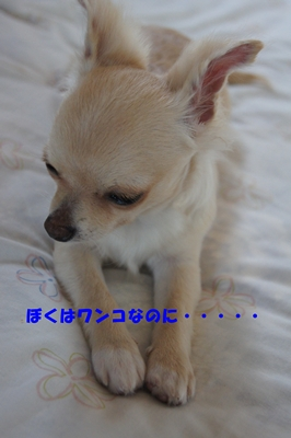 DSC03433-1.jpg
