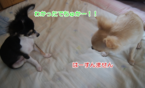 DSC05709.jpg