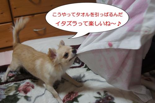 引っぱるなっちゅ~の!!