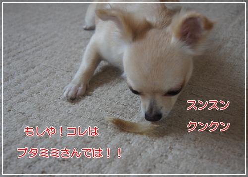 DSC06934.jpg
