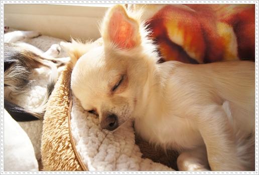 寝てるときはまるで天使みたい~