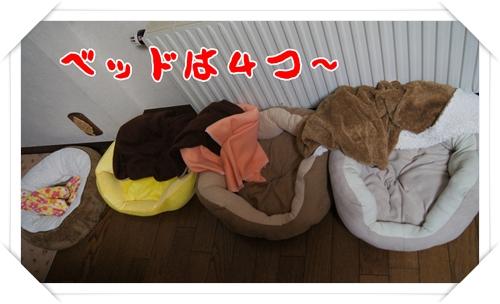 ふうかふかおNEWのベッドは大人気!!