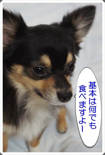 DSC09006.jpg