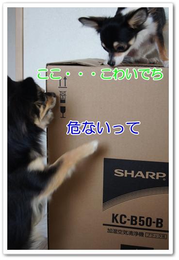 DSC09346-1.jpg