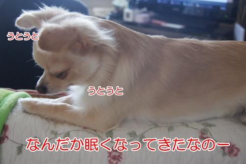 DSC09693.jpg