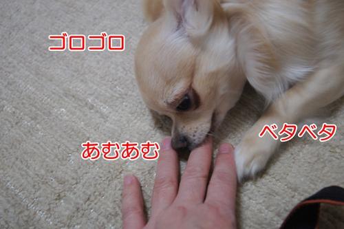 DSC09859.jpg
