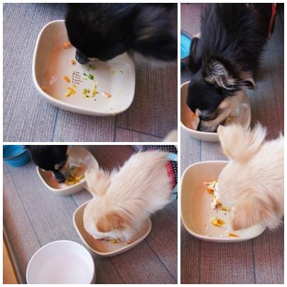 cats082502.jpg