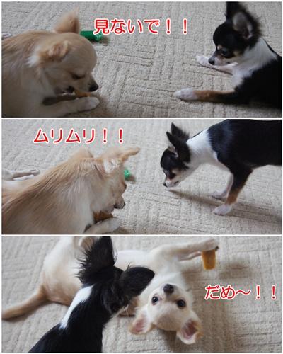 cats091006.jpg