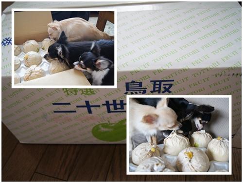 cats091405.jpg