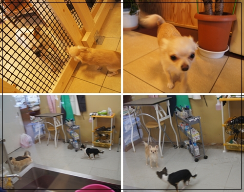 cats120604.jpg
