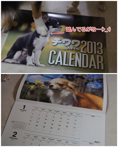 cats120702.jpg