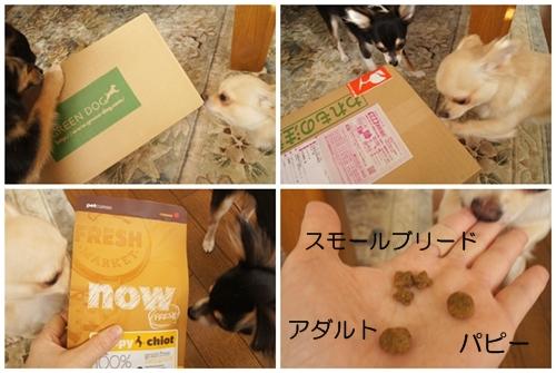 cats121401-1.jpg