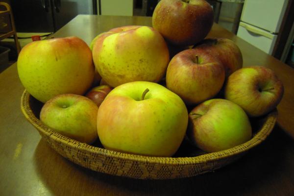 りんご いただきました~♪