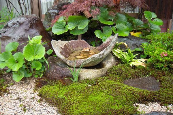 苔と手水鉢