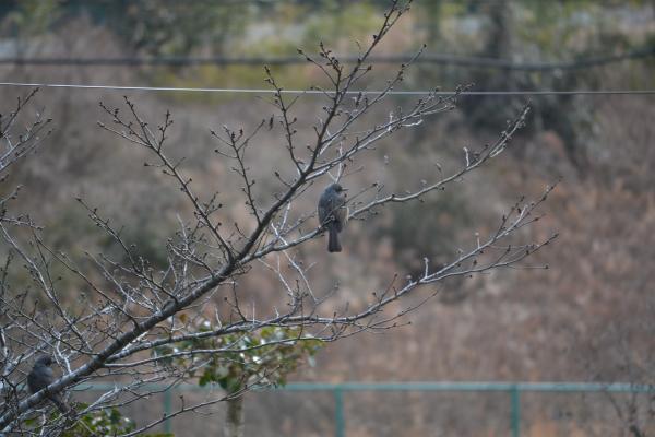 鳥が庭の木に