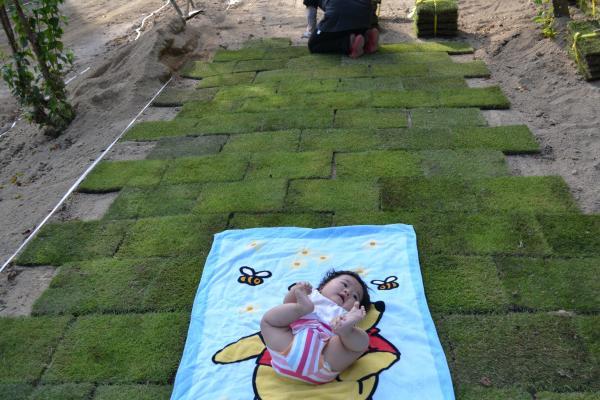 芝張り作業と柑奈
