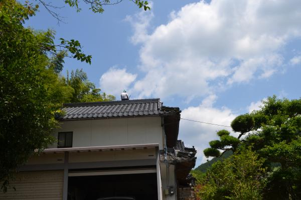 屋根で一休み