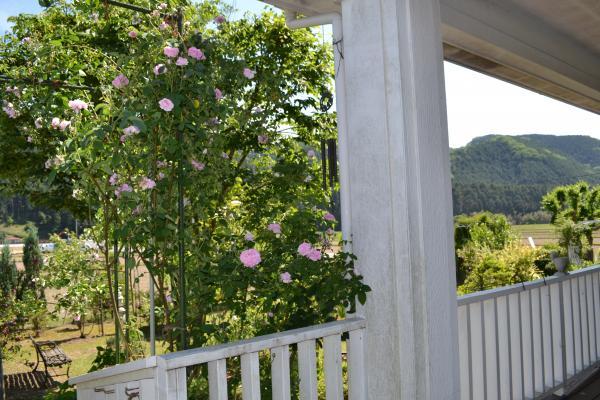 玄関横 の 薔薇
