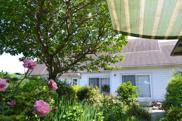 中庭の さくらんぼの木