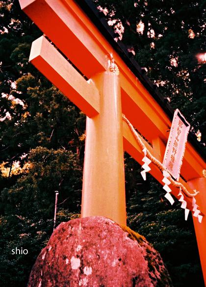 shio_鳥居