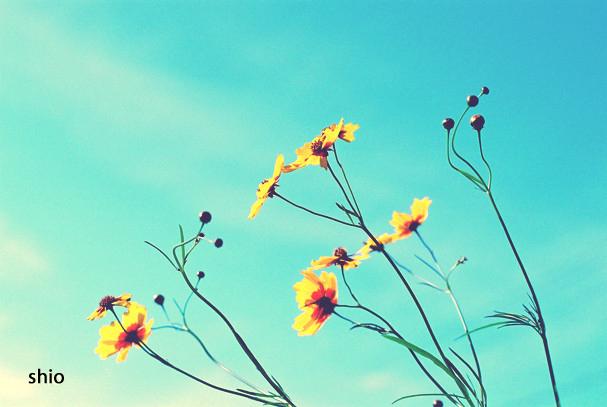 shio_黄色、揺れる