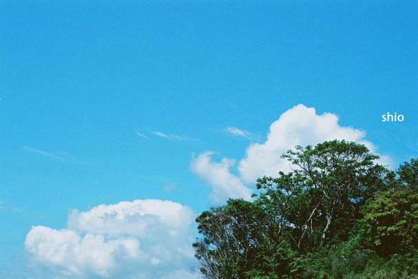shio_空と雲と木a