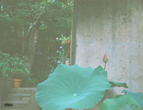 shio_スメカフェ