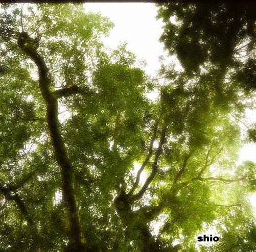 shio_木