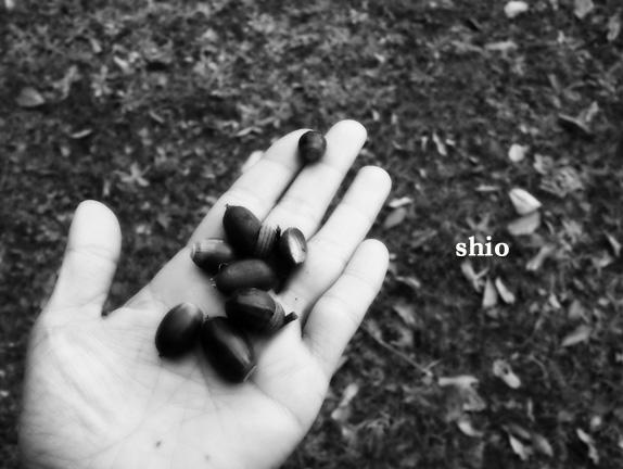 shio_どんぐり