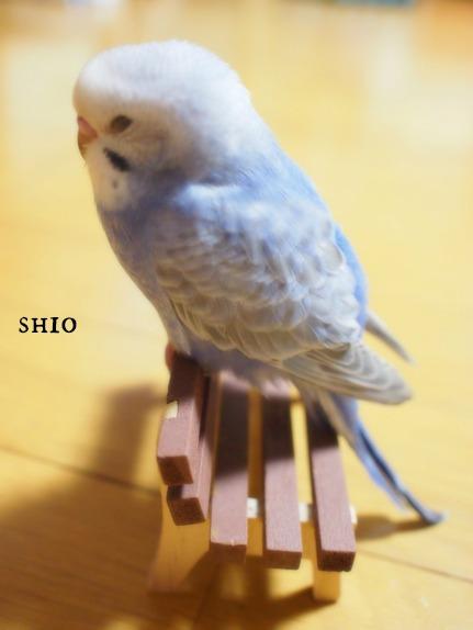 shio_てん
