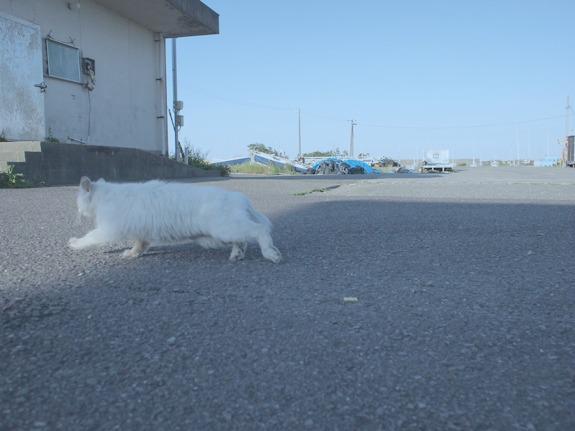 shio_猫3