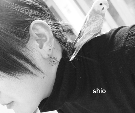 shio_bird.jpg