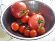 収獲したトマト