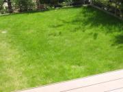 芝生 伸び