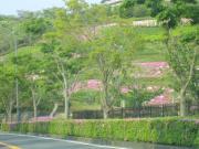 湘南国際村 ツツジ2