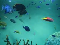 葛西臨海水族館 内部